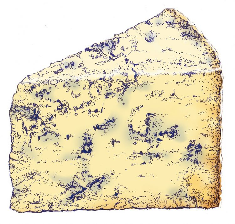 drawing of mature stilton by Simon Lewis